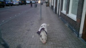 On February 15, 2013, ten months after I got to Delft, I met him again. His name is Bob and loves eating!